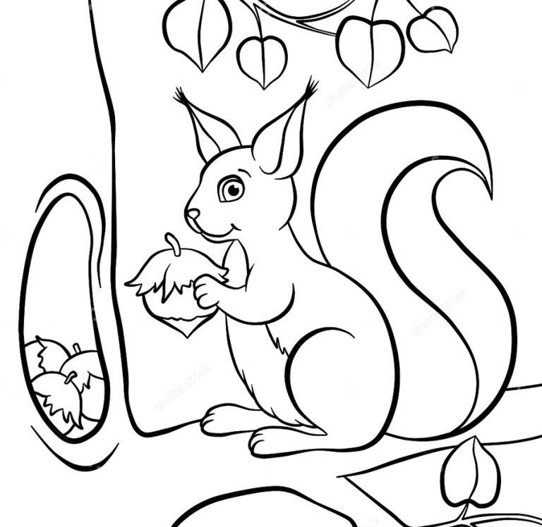 Раскраска белочка с орешками на vipraskraski.ru