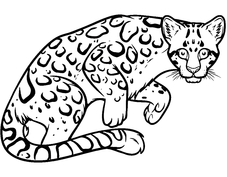Раскраска дымчатый леопард на vipraskraski.ru