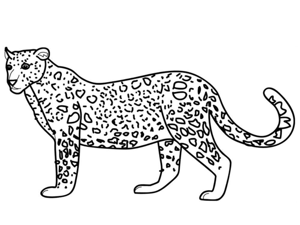 Раскраска животное леопард на vipraskraski.ru